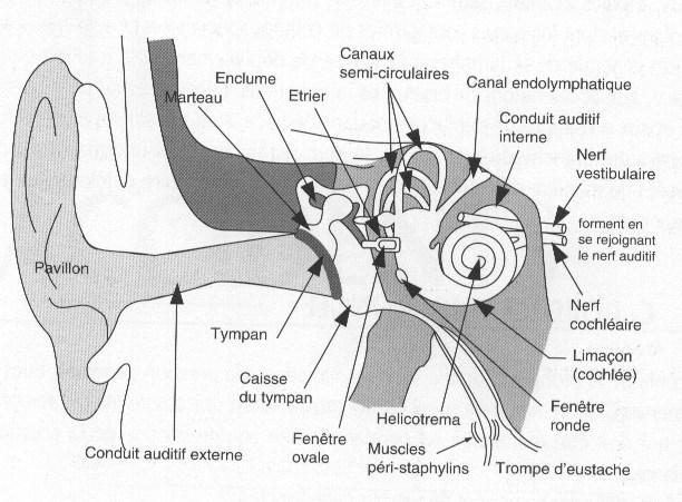 Cours Physiologie En Plongée